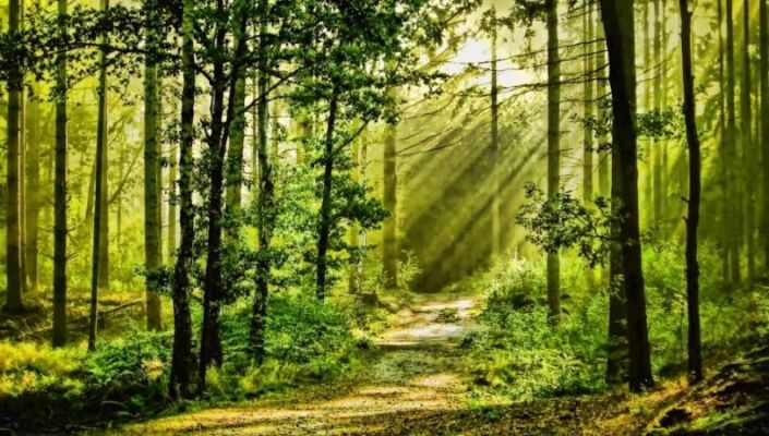 forest-nature-793x450