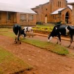 5 rwanda 2015