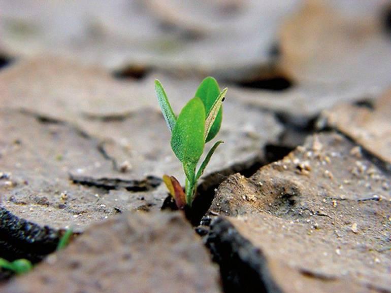 La-morte-del-chicco-di-grano-genera-molto-frutto_articleimage