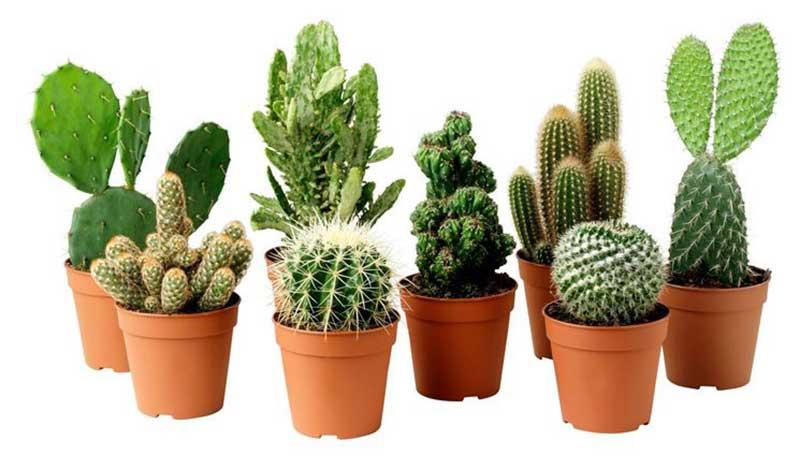 vasi-piante-grasse-1